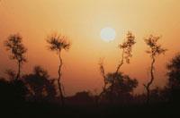 太陽と木のシルエット(オレンジ色) パキスタン 02265015187| 写真素材・ストックフォト・画像・イラスト素材|アマナイメージズ