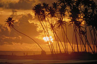 太陽と椰子の木のシルエットと雲(オレンジ色) 02265015188| 写真素材・ストックフォト・画像・イラスト素材|アマナイメージズ