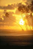 太陽と椰子の木のシルエットと雲(オレンジ色) 02265015189| 写真素材・ストックフォト・画像・イラスト素材|アマナイメージズ