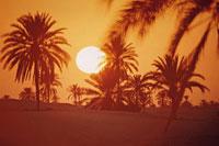 太陽と木のシルエット(オレンジ色) ドバイ ペルシャ湾 02265015190| 写真素材・ストックフォト・画像・イラスト素材|アマナイメージズ