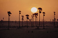オレンジ色に染まる空と木のシルエット 02265015201| 写真素材・ストックフォト・画像・イラスト素材|アマナイメージズ