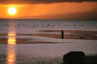 オレンジ色に染まる空と海  ニューギニア 02265015202| 写真素材・ストックフォト・画像・イラスト素材|アマナイメージズ