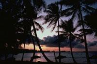 椰子の木のシルエットと海(オレンジ色) パラダイス島 バハマ 02265015211| 写真素材・ストックフォト・画像・イラスト素材|アマナイメージズ