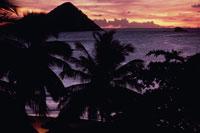 海と椰子の木のシルエット(オレンジ色) カリブ海 02265015251| 写真素材・ストックフォト・画像・イラスト素材|アマナイメージズ
