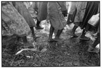 歩くルワンダ難民たちの足 1994年 タンザニア
