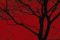 赤い背景の木のシルエット オランダ 02265017886| 写真素材・ストックフォト・画像・イラスト素材|アマナイメージズ