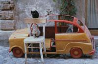 車の乗り物に集まるネコたち