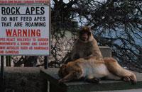 出没注意書の看板と2匹の猿 ジブラルタル 02265019748| 写真素材・ストックフォト・画像・イラスト素材|アマナイメージズ