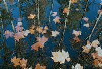 水に浮かぶ落ち葉 アキテーヌ フランス 02265020408| 写真素材・ストックフォト・画像・イラスト素材|アマナイメージズ