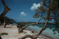 砂浜に生える木と海 キュラソー 02265020734| 写真素材・ストックフォト・画像・イラスト素材|アマナイメージズ