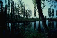 クリトゥンノの泉の白鳥と並木 アシッジ イタリア 02265021200| 写真素材・ストックフォト・画像・イラスト素材|アマナイメージズ