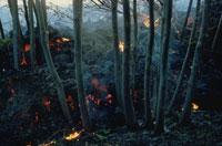 エトナ山の溶岩流で焼けた森 シシリー島 イタリア