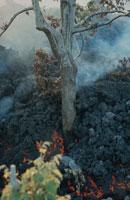 エトナ山の噴火で焼けた葡萄園 シシリー島 イタリア