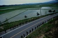 陸軍の演習で並ぶ軍隊 カンナン 韓国 02265022582| 写真素材・ストックフォト・画像・イラスト素材|アマナイメージズ