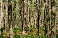 森 キテーヌ地方 フランス 02265023341| 写真素材・ストックフォト・画像・イラスト素材|アマナイメージズ