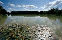 湖   ミディ・ピレネー地方 フランス 02265023363| 写真素材・ストックフォト・画像・イラスト素材|アマナイメージズ