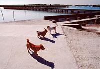 水辺と3匹の犬  コマッキュ地方 イタリア