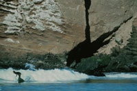 サーフィン 北カリフォルニア アメリカ
