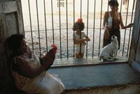 犬と鶏と人たち