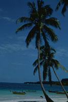 やしの木とビーチ 1991年