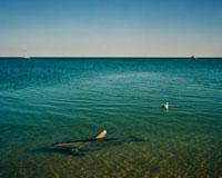 浅瀬にやって来たイルカ
