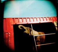 赤いコンテナの中の象