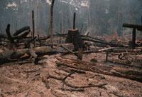 焼き払われた森林、アマゾン、ブラジル
