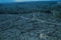木場のために伐採された森林 アマゾン 1989年