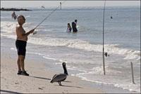 海岸で釣り糸を垂らす老人とペリカン