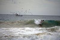 サーファーと鳥の群れ 02265038025| 写真素材・ストックフォト・画像・イラスト素材|アマナイメージズ