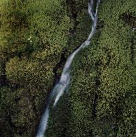 緑の上を流れる水