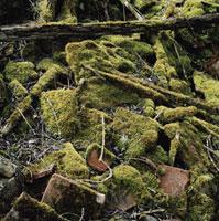 苔に覆われた瓦礫