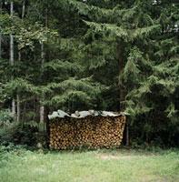 森の中の薪置き場