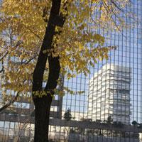 紅葉した木とガラスに反射するビル