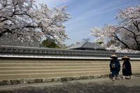 桜が咲く塀の前を通る2人の僧
