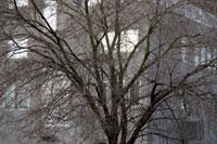 冬の樹木とアパート