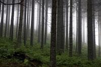 霧の出た森の中