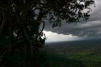 熱帯雨林にかかる雲