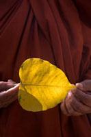菩提樹の葉を持つ仏教僧