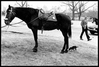 馬と小さな犬