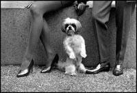 犬とカップル 02265039696| 写真素材・ストックフォト・画像・イラスト素材|アマナイメージズ