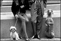 カップルと二匹の犬 02265039812| 写真素材・ストックフォト・画像・イラスト素材|アマナイメージズ