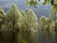 湖に浮かぶ森林
