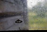 窓にとまっている蝶
