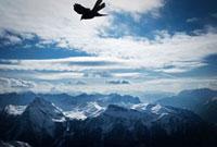 山頂より高く飛ぶ鳥