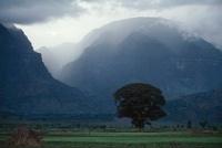 霧に覆われた山々を望む平地