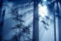 光が射し込む森林