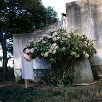 アジサイを香る女性 02265040165| 写真素材・ストックフォト・画像・イラスト素材|アマナイメージズ