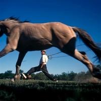 走る馬と縄を振るう男性
