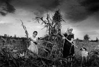 農場で収穫をする女性と少女